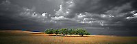 Wind Break - a group of green trees forms a barrier in a barren landscape as a storm approaches.