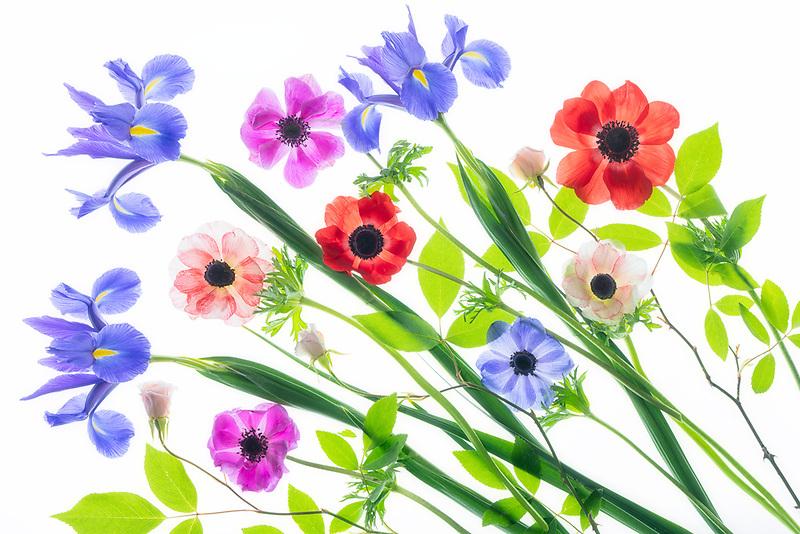 Boquet of iris and anemone flowers.