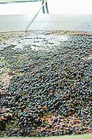 fermenting must and grapes aragones grapes quinta do mouro alentejo portugal