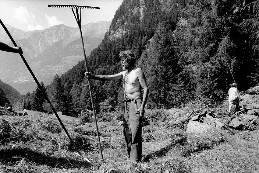 Switzerland. Canton Graubunden. Alp Bratel, 600 meters above Bondo. Bregaglia valley. Family Salis makes hay on the grassland. The man is stripped to the waist. Swiss alpine farmers. Alps mountains peasants.  © 1994 Didier Ruef