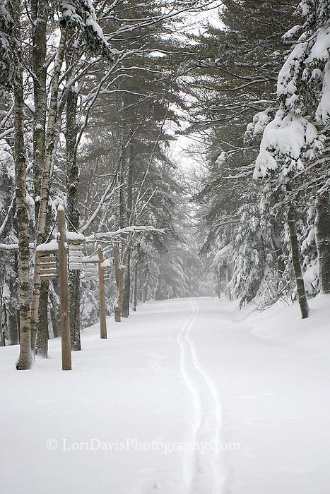 Ski Tracks along Carriage Road  #A20
