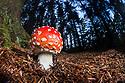 Kingdom of the Fungi