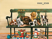 GIORDANO, CHRISTMAS ANIMALS, WEIHNACHTEN TIERE, NAVIDAD ANIMALES, paintings+++++,USGI2368,#XA#