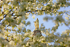 Mary statue atop the golden dome in spring.<br /> <br /> Photo by Matt Cashore/University of Notre Dame