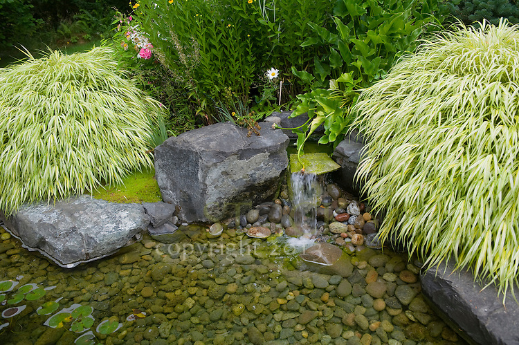 Pond with Rocks and Plants