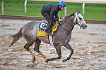October 28, 2015 :   Frosted, trained by Kiaran P. McLaughlin and owned by Godolphin Racing LLC, exercises in preparation for the Breeders' Cup Classic at Keeneland Race Track in Lexington, Kentucky on October 28, 2015. Scott Serio/ESW/CSM