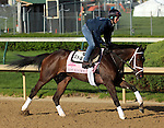 April 23, 2014  Got Lucky and rider Amy Lyn Mullen gallop at Churchill Downs.  She is trained by Todd Pletcher, owned by Hill 'n' Dale Equine Holdings, Inc. and Philip J. Steinberg, and finished second in the Gazelle Stakes at Aqueduct.