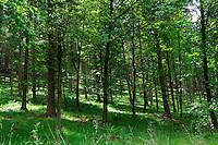 Oak woodland, Derbyshire.