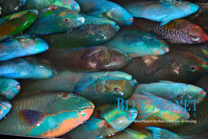 Parrotfish for sale at local market, Pohnpei, Federated States of Micronesia