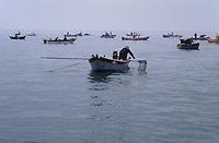 - clams harvest in the Scardovari lagoon (Po river delta)....- raccolta vongole nella sacca di Scardovari (delta fiume Po)