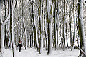 29/04/16 <br /> <br /> Carolyn Bointon walks among snow covered trees in Alsop Moor near Ashbourne after snowfall hits the Derbyshire Peak District.<br /> <br /> All Rights Reserved: F Stop Press Ltd. +44(0)1335 418365   +44 (0)7765 242650 www.fstoppress.com