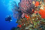 Coral reef, diver, Dominica