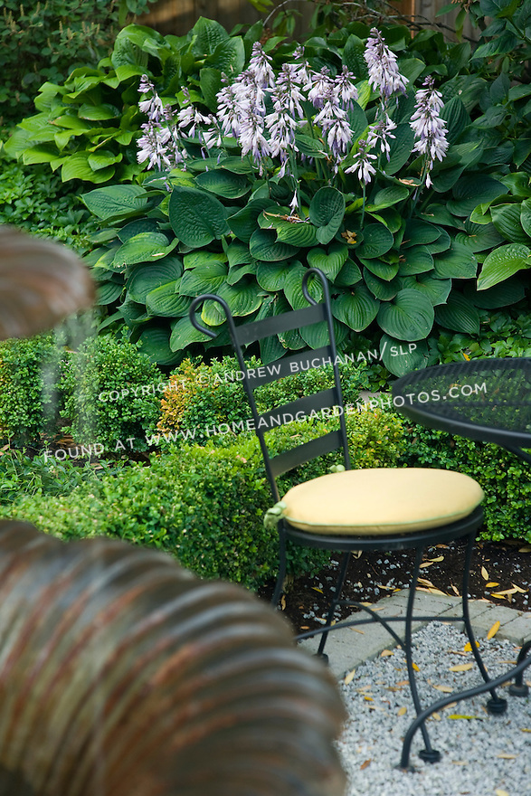 detail of a black metal patio table and matching chair with a yellow cushion backed by a strikingly large hosta in full bloom within a formal backyard garden framed by boxwood and paved with gravel, behind a home in a suburban community east of Seattle