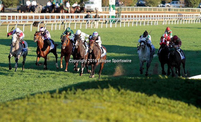 """LEXINGTON, KY - OCTOBER 08: #7 Miss Temple City and jockey Edgar Prado win the 31st running of The Shadwell Turf Mile (Grade 1) $1,000,000  Breeders' Cup """"Win and You're In Mile Division"""" for owner The Club Racing, Allen Rosenblum and Sagamore Farm and trainer Graham H. Motion at Keeneland Race Course in Lexington, KY.  October 8, 2016, Lexington, Kentucky. (Photo by Candice Chavez/Eclipse Sportswire/Getty Images)"""