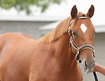 11 September 2010.  Hip #202  Street Cry (IRE) - Style Setter colt, consigned by Lane's End.