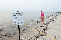 Person breaking the law, distrubing feeding grounds for  endangered shorebirds, Delaware Bay, New Jersey