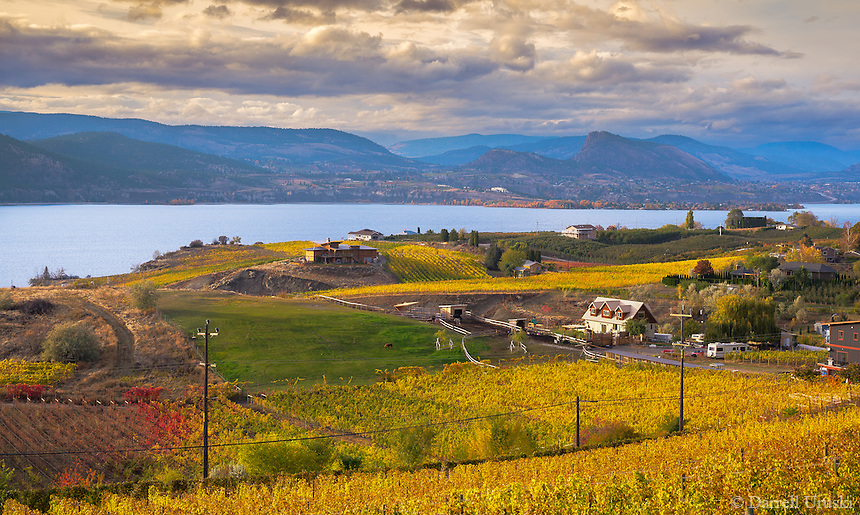 Fine Art Landscape Photograph fall scenic of the vineyards situated by beautiful Okanagan lake in British Columbia Canada.