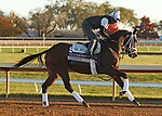 Speech, trained by trainer Michael W. McCarthy, exercises in preparation for the Breeders' Cup Filly & Mare Sprint at Keeneland Racetrack in Lexington, Kentucky on November 4, 2020.