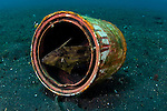 A filefish making a home in a discarded paint can, Lembeh Strait, Bitung, North Sulawesi, Indonesia, Pacific Ocean
