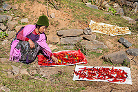 Phobjikha, Bhutan.  Woman Spreading Chili Peppers to Dry.