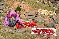 Phobjikha, Bhutan.  Woman Spreading Chili Peppers to Dry.