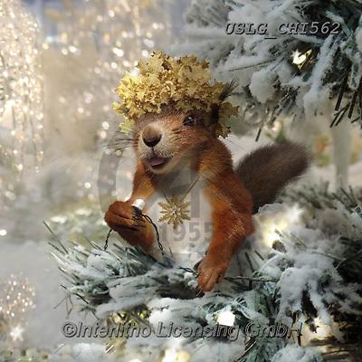 CHIARA,CHRISTMAS ANIMALS, WEIHNACHTEN TIERE, NAVIDAD ANIMALES, paintings+++++,USLGCHI562,#XA# ,funny ,funny