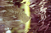 """A fine art nature abstract of ice patterns captured in early morning light on the frozen Merced River near Yosemite Valley.  The horizontal image has gold and mauve tones with horizontal lines of ice moving from the left into the center of the image.  This image pairs well with """"Merced Ice Patterns No 3 (vertical)."""""""