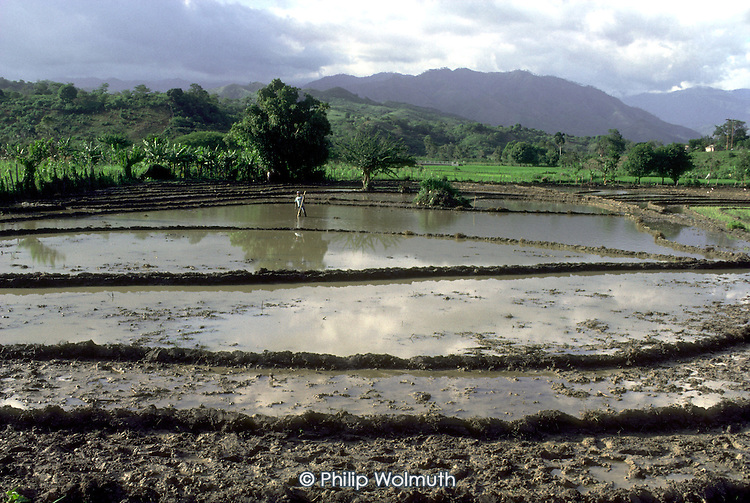 A farmer works in a rice field in San Juan province