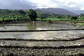 A farmer works in a rice field in San Juan province