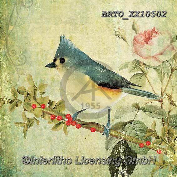 Alfredo, STILL LIFE STILLEBEN, NATURALEZA MORTA, paintings+++++,BRTOXX10502,#i#, EVERYDAY