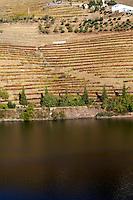 vineyards ferreira quinta vista alegre douro portugal