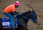 DEL MAR, CA - OCTOBER 30: Mongolian Saturday, owned by Mongolian Stable and trained by Enebish Ganbat, exercises in preparation for Breeders' Cup Turf Sprint at Del Mar Thoroughbred Club on October 30, 2017 in Del Mar, California. (Photo by Jon Durr/Eclipse Sportswire/Breeders Cup)