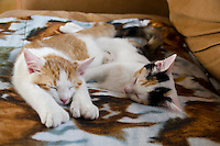 Two kittens sleeping on a couch, USA