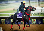 DEL MAR, CA - OCTOBER 27:  Sharp Azteca, owned by Gelfenstein Farm and trained by Jorge Navarro, exercises in preparation for the Breeders' Cup Las Vegas Dirt Mile  at Del Mar Thoroughbred Club on {mothname} 27, 2017 in Del Mar, California. (Photo by Alex Evers/Eclipse Sportswire/Breeders Cup)