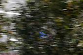 2017 Verizon IndyCar Series<br /> Toyota Grand Prix of Long Beach<br /> Streets of Long Beach, CA USA<br /> Sunday 9 April 2017<br /> Scott Dixon<br /> World Copyright: Jake Galstad/LAT Images
