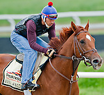 Animal Kingdom, winner of the 137th Kentucky Derby, continues to train for the Preakness at the Fair Hill Training Center on May 16, 2011 in Fair Hill, Maryland.