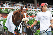Pitched Perfectly wins fourth race at Saratoga on Aug. 23, 2009 for trainer Barclay Tag and Lael Stables.