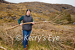 Patricia Deane clearing rhododendronsin the Gap of Dunloe on Tuesday