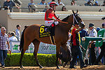 """DEL MAR, CA  AUGUST 18: #6 Itsinthepost, ridden by Tyler Baze,in the post parade of the Del Mar Handicap by The Japan Racing Association (Grade ll), Breeders' Cup """"Win and You're In Turf Division"""", on August 18, 2018 at Del Mar Thoroughbred Club in Del Mar, CA.(Photo by Casey Phillips/Eclipse Sportswire/Getty Images"""