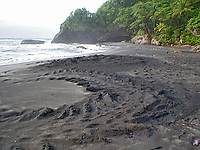 tracks left by a nesting leatherback sea turtle, Dermochelys coriacea, Dominica, Caribbean, Atlantic