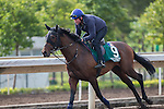 DEC 11,2015: Ming Dynasty ,trained by Mikel Delzangles,exercises in preparation for the Hong Kong Vase at Sha Tin in New Territories,Hong Kong. Kazushi Ishida/ESW/CSM