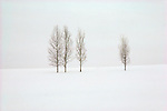 Four aspen trees stand in a snowy field against a winter sky in Jackson, Wyoming.