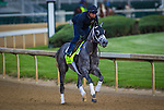 LOUISVILLE, KY - MAY 04: Destin gallops in preparation for the Kentucky Derby at Churchill Downs on May 04, 2016 in Louisville, Kentucky. (Photo by Zoe Metz/Eclipse Sportswire/Getty Images)