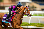DEL MAR, CA - NOVEMBER 01:  Flameaway, owned by John C. Oxley and trained by Mark E. Casse, exercises in preparation for Breeders' Cup Juvenile Turf at Del Mar Thoroughbred Club on November 01, 2017 in Del Mar, California. (Photo by Alex Evers/Eclipse Sportswire/Breeders Cup)