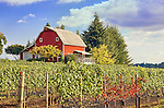 Vineyard in Dundee Hills EVA, a Willamette Valley, Oregon wine region.  Great views of the valley and rolling hills make this a terrifically scenic wine region.