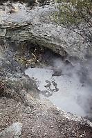 Boiling Mud Pot, Waiotapu Thermal Site, near Rotorua, north island, New Zealand.
