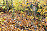 Leaf drop along the Mt. Tecumseh Trail in Waterville Valley, New Hampshire during the autumn months. This mountain is part of the White Mountain National Forest and is named for the Shawnee chief, Tecumseh (c.1768–1813).