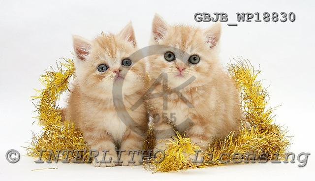 Kim, CHRISTMAS ANIMALS, photos, GBJBWP18830,#XA# stickers