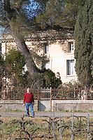 Bernard Jany Chateau la Condamine Bertrand. Pezenas region. Languedoc. Vines trained in Cordon royat pruning. Owner winemaker. France. Europe. Vineyard.