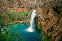 Fremont cottonwoods and Havasu Falls<br /> Havasu Creek,  Havasu Canyon<br /> Havasupai Indian Reservation<br /> Colorado Plateau,  Arizona
